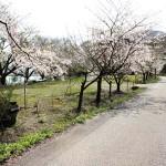 桜公園内道路